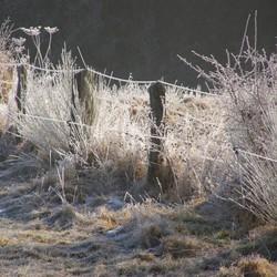 mid winterfeest