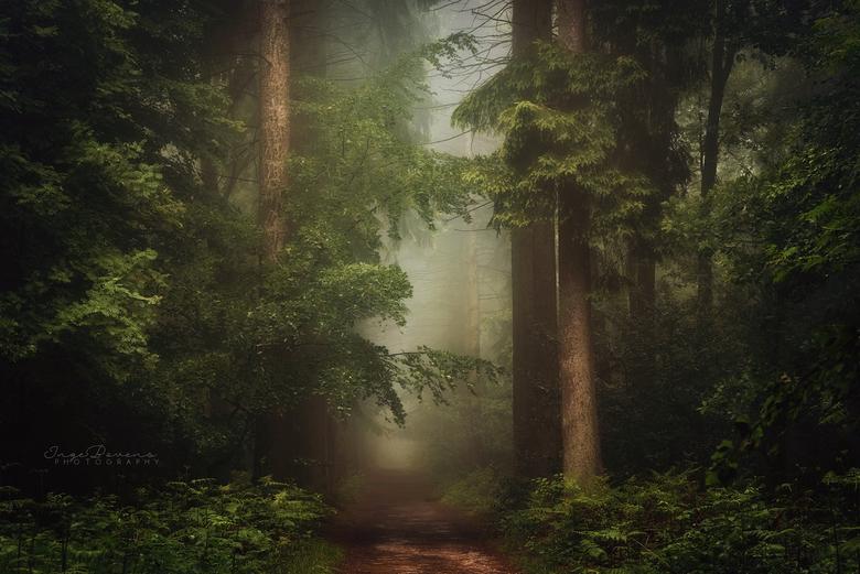 Here Bathe Your Soul in Silence. - De blaadjes zijn amper weg, en ik verlang alweer naar weelderige bossen zoals deze.