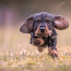 I can run very fast and my ears help me with that...