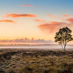 Eenzame boom tijdens zonsopkomst