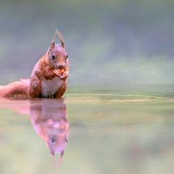 Reflectie Eekhoorn