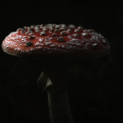 Dark Mushroom