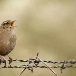 Singing ....