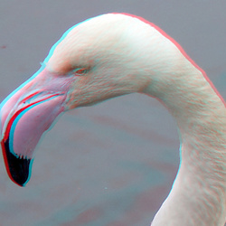 Flamingo Blijdorp Zoo 3D