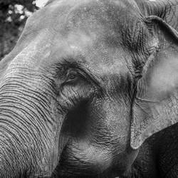 The Elephant..