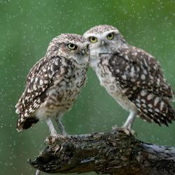 Samen in de regen.