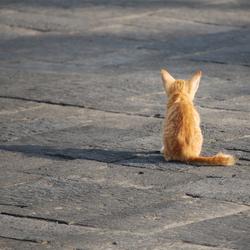 Kitten in de zon