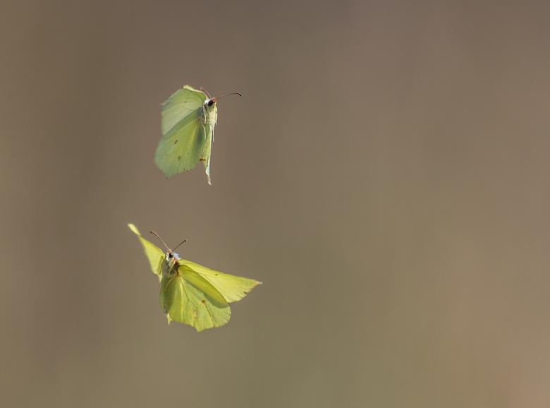 Duo vlinders.