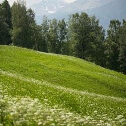 Alpenweide II