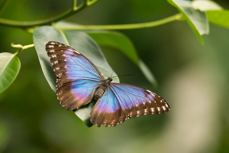 vlinder - Een paar weken geleden weer eens een bezoekje aan de dierentuin en vlindertuin in Emmen gebracht. Het valt nog niet mee om deze prachtige vl
