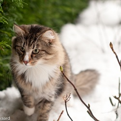 Jagen in de sneeuw