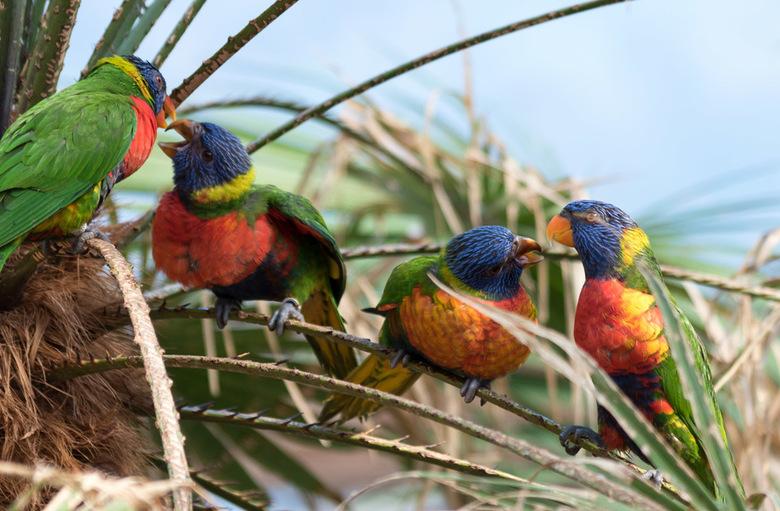Vogelpark Avifauna  -