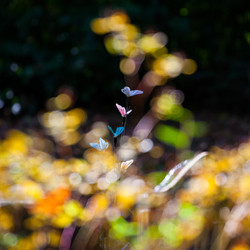 Ergens, fladderen zijden vlindertjes mee met de wind