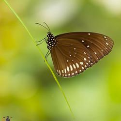 Favoriete vlinder