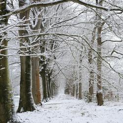 winter in Katlijker bos