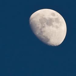 Maan uit de hand