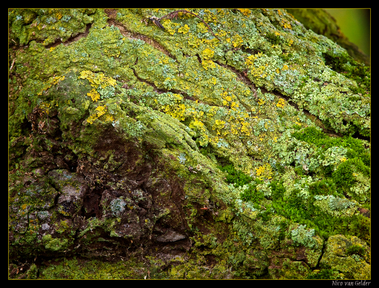 Rotslandschapje 2 - Nog een detail van een oude wilg. Hier zijn vooral prachtige korstmossen te zien. In ben dol op knotwilgen, vooral als ze heel oud