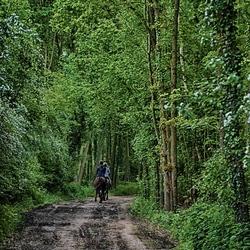 ruiters in het bos