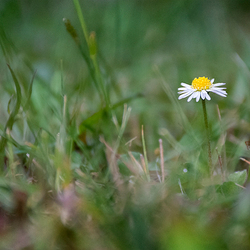 . . . Alone . . .