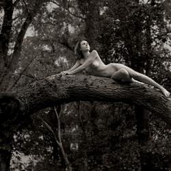 Shakin' the tree