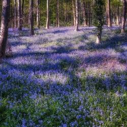 Blue Forest (Lg G5 JPG shot)