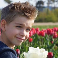 tulpenportretje