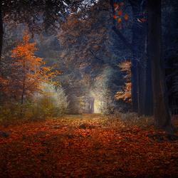 """""""Autumn impression"""""""