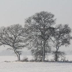 Winterrust