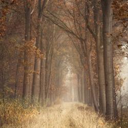 Autumn sighs