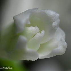 Softly II