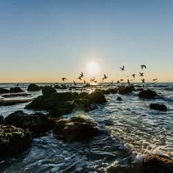 Zenn aan zee