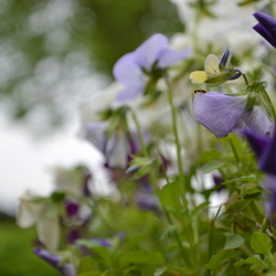 Mier in bloemenjungle