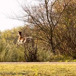 Vliegende hollander