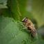Beestje op blad