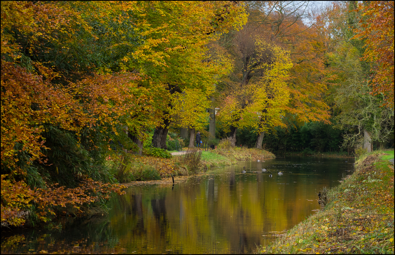 Herfst bij Landgoed  Elswout  - Afgelopen week maar weer eens in het bos bij Landgoed Elswout wezen banjeren'Eindelijk zijn die kleuren er