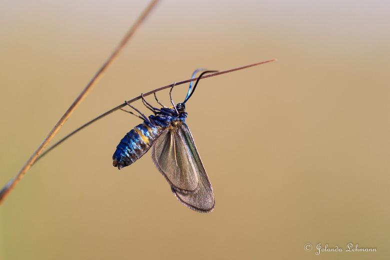 Vlinder - Ook hier weet ik de naam niet van. Wie het weet mag het zeggen. Wel een bijzonder en mooi klein beestje