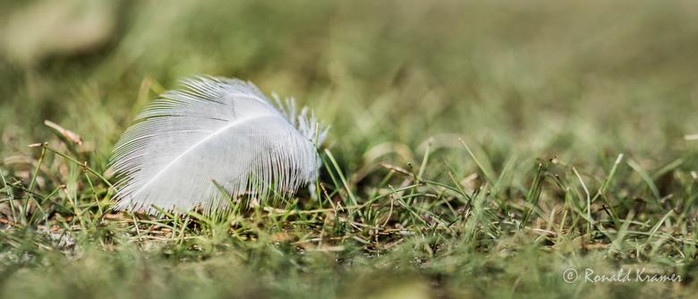 In de rui - Een avondwandeling rondom een vogelgebied, vrijwel windstil. Een eenzaam donsveertje, te mooi om niets mee te doen.