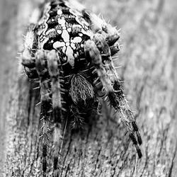 Spinnentijd!