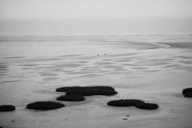 Westerschelde - Waarde - 2 eenden flaneren aan de Westerschelde nabij Waarde, Zeeland.