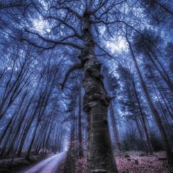 mist in het Blaricumse bos3