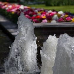 Zon, water en bloemen