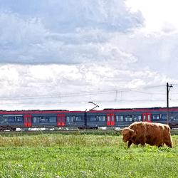 Zaanse Rietveld in Alphen aan den Rijn