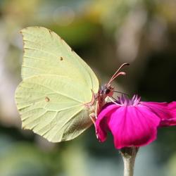 vlinderlicht