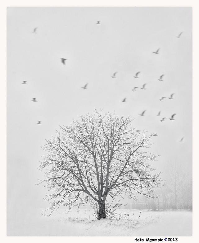 The winter is leaving - De laatste uit mijn winter-sfeerreeks; kan nog net voor het lente wordt! Kijk ook even naar de anderen in de reeks. Ben met zw
