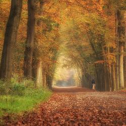 Ruiter in een kleurrijk bos