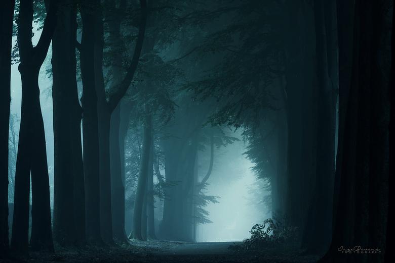 The Darkness of Night. -