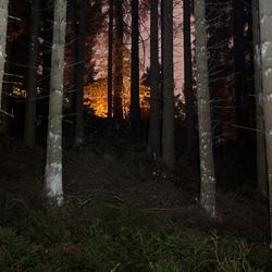Bomen in de nacht.