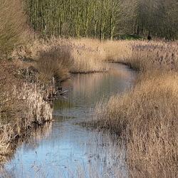 Vermoedelijk omgeving Delft.