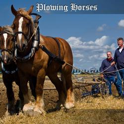 ploegend paarden