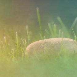Verscholen in het gras-